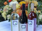 The wines.... Nervous before their public debut